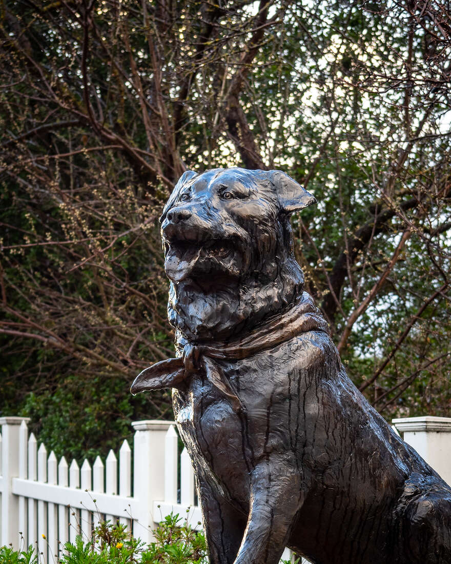 A statue of Bosco, the dog elected mayor of Sunol, California.