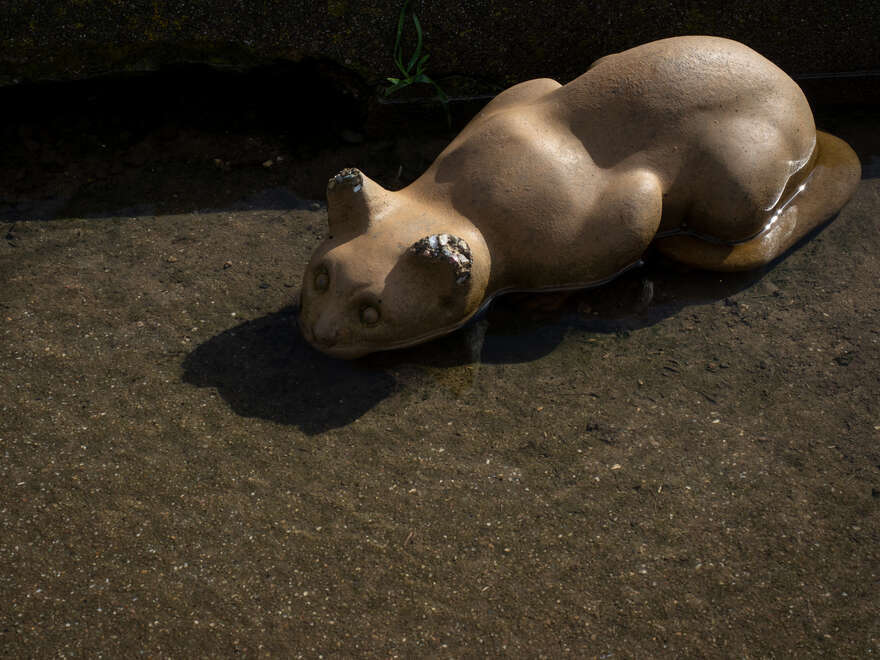 Stone Cats at San Pablo Ridge